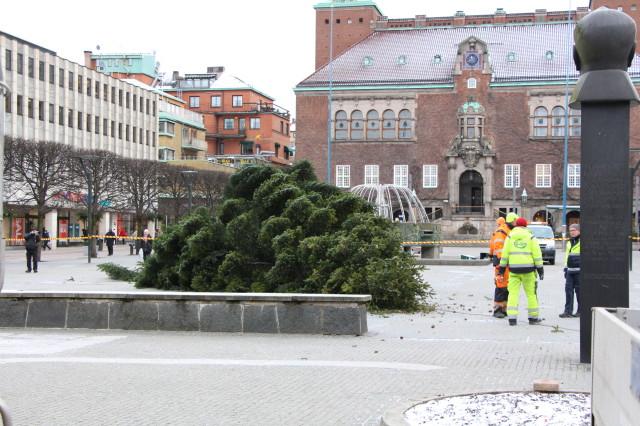 """Stora torgets julgran """"deltog"""" också i julgransplundringen på Ryaverket."""