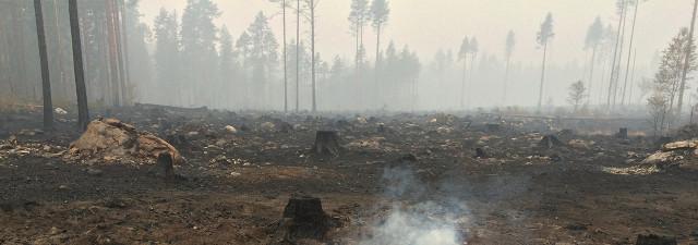 ekopark_fran_skogsbrand-foto-Anders_Ekeblad
